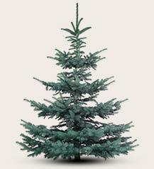 Weihnachtsbaum mannheim kaufen