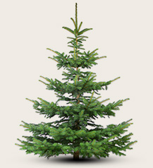 Echte Tannenbaum Kaufen.Weihnachtsbaum Kaufen In Mannheim Christbaum Center